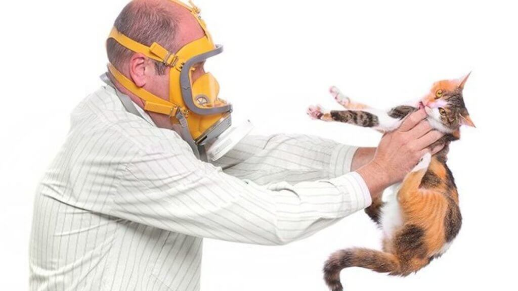 Появится ли аллергия на кошку