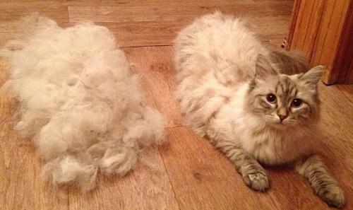 Шерсть кошек
